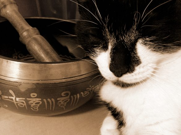 Meditation bowl with cat