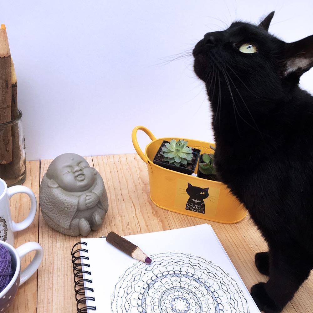 Morgan, the cat