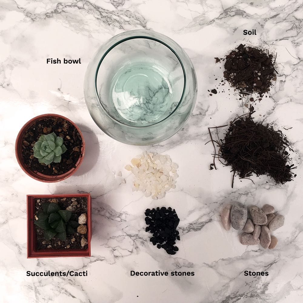 Succulent Terrarium Supplies